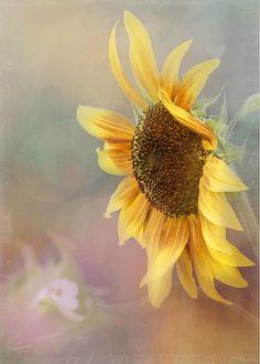 Sunflower Art - Be The Sunflower - by Jordan Blackstone jordan-blackstone.artistwebsites.com #sunflower #flowerart #floralphotography