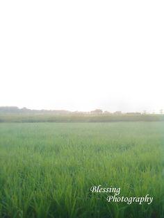 Field on morning...