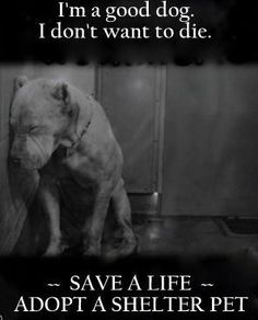 Please please please adopt! SAVE a LIFE! All my dogs are saved dogs. people who breed dogs should be made to go take care of shelter dogs. Shelter Dogs, Animal Shelter, Rescue Dogs, Animal Rescue, Animal Adoption, Save Animals, Animals And Pets, I Love Dogs, Puppy Love