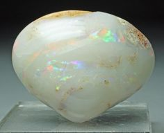 Fossilized Clam replaced by Opal