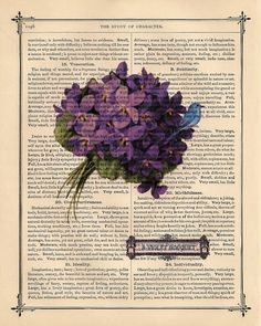 Purple violet and bluebird bouquet print on old print page