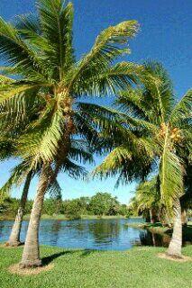 Preciosas palmeras