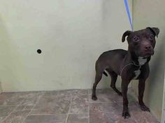 TO BE DESTROYED - 07/21/14 Manhattan Center -P  My name is NICE. My Animal ID # is A1006582. I am a female brown and white labrador retr mix. The shelter thinks I am about 4 YEARS old.  I came in the shelter as a STRAY on 07/14/2014 from NY 11231, owner surrender reason stated was STRAY. https://www.facebook.com/photo.php?fbid=837043312975216&set=a.611290788883804.1073741851.152876678058553&type=3&theater