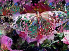 Rising Dawn Butterfly