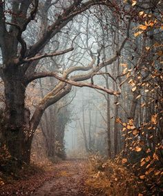 Foggy walk in the autumn woods