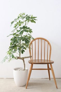 Even those without a green thumb can appreciate the beauty of houseplants – if you're one of those people, this post is for you! We've compiled information on
