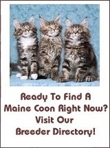 Find Maine Coon Kittens For Sale!