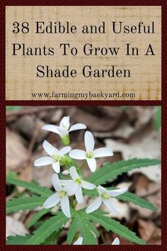 One of the trickiest things about growing your own food is sometimes the space you haven't isn't ideal.  Just because you have a shade garden doesn't mean you can't grow your own food!  Here are 38 edible or useful plants that you can grow even in the shade!