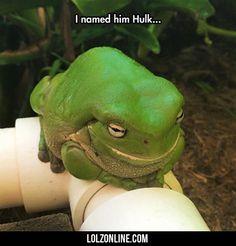 I Named Him Hulk...