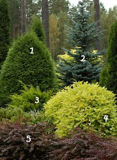 Amazing Fresh Frontyard and Backyard Landscaping Ideas Give your yard a fresh look this time with these beauty garden design ideas. -Give your yard a fresh look this time with these beauty garden design ideas. Garden Shrubs, Garden Trees, Landscaping Plants, Front Yard Landscaping, Landscaping Ideas, Backyard Plants, Landscaping Software, Landscaping Company, Luxury Landscaping