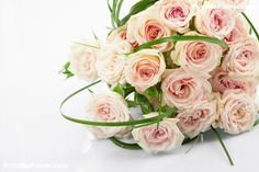Poster of Beautiful Roses, Nature Posters, #poster, #printmeposter, #mousepad, #tshirt