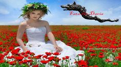 www.facebook.com/fatadindacia.net www.fatadindacia.net www.MagnificentRomania.com
