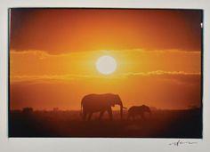 Elephants at Sunset by Neil Leifer