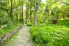 """The benefit of a plant community is that it requires less work over time. Watering, mulching, and leaf removal are avoided, as in this garden by James Golden, replaced by large-scale management - mowing, burning, and selective removal and addition. The authors' credo is """"when plants are allowed to follow their own destiny—to self-design their own community—more robust plantings will follow.""""   (My garden, meanders with abandon; it gives little thought to self-actualization.)"""