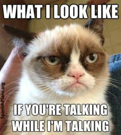 What I look like if you're talking while i'm talking Grumpy cat meme