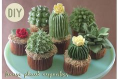 """Designer and baker Alana Jones-Mann has created adorable cupcakes topped with cactus- and succulent-shaped frosting. The cupcakes include """"sand"""" made of finely processed Teddy Grahams. She has post. Cupcakes Succulents, Kaktus Cupcakes, Garden Cupcakes, Edible Succulents, Cupcakes Bonitos, Cupcakes Decorados, Beautiful Cakes, Amazing Cakes, Cupcake Recipes"""