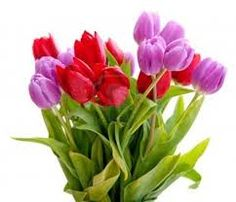 Beautiful Bouquet of Tulip Flowers.