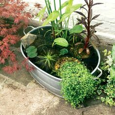 Create an attractive mini-pond, perfect for small gardens or balconies, using our easy practical guide, from the experts at BBC Gardeners' World Magazine. Container Pond, Container Water Gardens, Patio Pond, Ponds Backyard, Small Water Features, Water Features In The Garden, Small Water Gardens, Mini Pond, Eco Garden