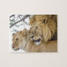 Lion Couple_ Jigsaw Puzzle - cat cats kitten kitty pet love pussy