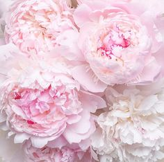 """andantegrazioso: """"Peonies and roses Pretty In Pink, Pink Flowers, Beautiful Flowers, House Beautiful, Wallpaper Rosa, Cabbage Roses, Flower Backgrounds, Beauty Art, Flower Power"""