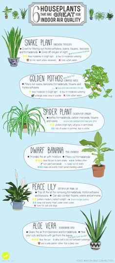 Handy Helpful House-Plant Diagrams