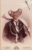 Mr. Froggy Goes a Courtin' by ~Shamanmoon on deviantART
