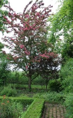 Einer der beliebtesten Kleinbäume ist der  Echte Rotdorn (Crataegus laevigata 'Paul's Scarlet'). Besonders hübsch sind seine leuchtend karmesinroten, gefüllten Blüten, die im Mai zeigen. Der Baum ist sehr schnittverträglich und ist daher gut für Formschnitt geeignet. Ideal ist ein sonniger bis halbschattiger Standort, der nicht zu nährstoffarm und zu leicht sein darf.