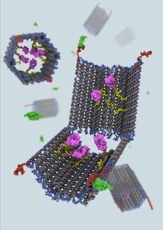 Origami a DNA per distruggere le cellule cancerose