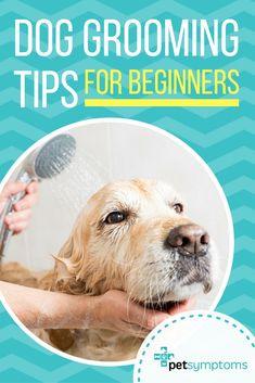 dog training,teach your dog,dog learning,dog tips,dog hacks Dog Grooming Tools, Dog Grooming Shop, Dog Grooming Salons, Dog Grooming Supplies, Poodle Grooming, Dog Grooming Business, Goldendoodle Grooming, Dog Supplies, Maltipoo