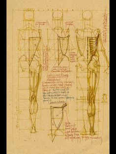 Michael Mentler (aka The Bone Doctor) will decode Da Vinci and take the mystery out of Michelangelo. Anatomy Study, Body Anatomy, Anatomy Reference, Human Anatomy, Art Reference, Gross Anatomy, Animal Anatomy, Anatomy Sketches, Anatomy Drawing