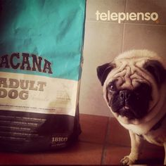 http://www.telepienso.com/products/acana-adult-dog
