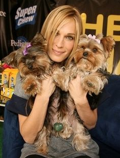 Molly Sims and her Yorkies