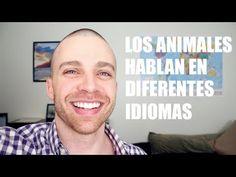 Los Animales Hablan En Diferentes Idiomas