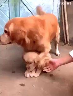 Cute Animal Photos, Cute Animal Videos, Funny Animal Pictures, Cute Funny Dogs, Cute Funny Animals, Funny Dog Videos, Cute Dogs And Puppies, Doggies, Cute Little Animals