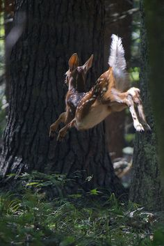 Baby deer Bambi fawn in the forest woods Nature Animals, Animals And Pets, Baby Animals, Funny Animals, Cute Animals, Forest Animals, Wild Animals, Spring Animals, Wildlife Nature