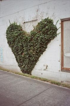 Pinning this heart ivy cause marks mom told me about the one she planted now I want to prune it to make it look like the heart....