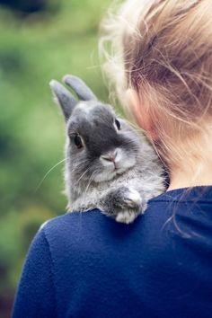 Bunny rabbit love / Rabbit / Adorable and Cute Animals Cute Creatures, Beautiful Creatures, Animals Beautiful, Beautiful Boys, Animals And Pets, Baby Animals, Cute Animals, Small Animals, Baby Bunnies