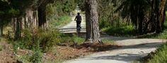 A_peaceful_cycle -New Zealand Cycling News, Walkways, Vacation Ideas, Bridges, Roads, New Zealand, Peace, Plants, Catwalks