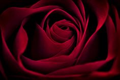 Red Rose by Henry (Hank) Klassen Big Flowers, Flowers Nature, Beautiful Flowers, Anime Wallpaper 1920x1080, Red Wallpaper, Red Rose Drawing, Cheryl Blossom Aesthetic, Fantasy Paintings, Red Aesthetic