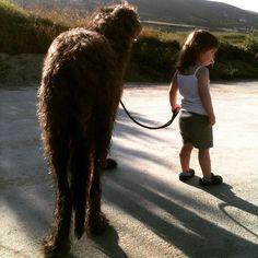 A girl and her giant dog #IrishWolfhoundsAreAGirlsBestFriend