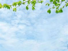 Blue sky w/ branch background