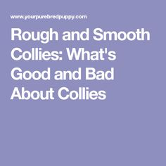 Rough and Smooth Collies: What's Good and Bad About Collies
