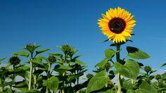 Der heutige Tag, ...  verspricht ein Supersonnentag zu werden. Mit blauem Himmel ohne Ende. Gut, es ist Donnerstag und kein Samstag, aber macht was draus. :-)