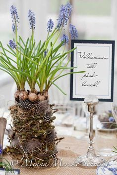 blomsterverkstad   Livet med trädgård, uterum och växter Spring Home Decor, Pretty Pastel, Rustic Design, Daffodils, Spring Wedding, Spring Time, Floral Arrangements, Table Settings, Place Card Holders