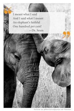 Elephant Quotes Sayings Elephant Spirit Totem And Power Animal