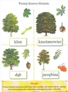 Polish Language, Autumn Activities For Kids, Furry Drawing, Montessori Activities, Travel With Kids, Kids Playing, Flora, Homeschool, Place Card Holders
