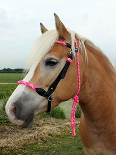 I think I'd like this bridle in blue and black or white and black