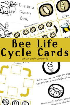 Bee Life Cycle Cards