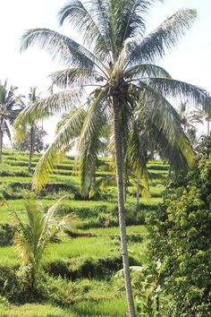 My Village in Java only with TravelloApps - TravelloMatic Indonesia