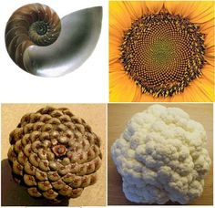 fibonacci numbers - Google Search